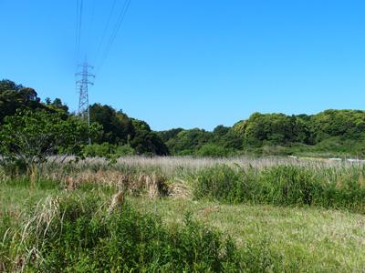 ほうき草を育てていた畑の一部は、「遊休耕作地」に。